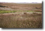 Spectacular 320± Acre Kansas Hunting Land