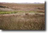 Spectacular 320± Acre Kansas Hunting Land