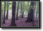 Ohio Hunting Land 84 Acres Whitetail Run Retreat
