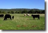 California Ranch Land 214 Acres Bullskin Ranch - 214 ac - Irrigated Past.