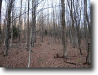 Wooded Acres in Plainfield NY with Stream