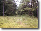 80 Acres of Timberland Near Starkville, MS