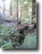California Land 20 Acres 20 ac redwood Forest, nr ocean @ Mendocino