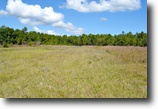 Florida Hunting Land 502 Acres Crescent City Ranch