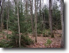 53 Beautiful Acres Bordering State Land