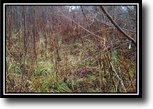 Ohio Hunting Land 44 Acres Hunter's Hideaway