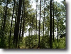 Georgia Land 83 Acres Levings Tract