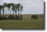 Florida Land 2 Acres 3 Creeks Crossing