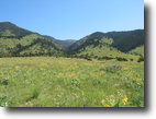 Montana Ranch Land 250 Acres Bridger Mountain Ranch hunting property