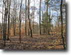7.6 Acre Wooded Tract In Metcalfe County
