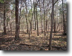 46 Acre wooded Tract In Metcalfe County