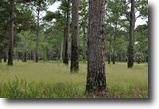 Florida Ranch Land 473 Acres Buckeye-Mitchell Place