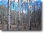 Tennessee Hunting Land 242 Acres Tellico Lake Tract