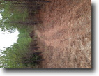 Beautiful 40 acre Timber Tract