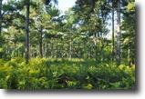112 Acres Bordering a Plantation