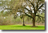 Florida Hunting Land 466 Acres Green Hill Farm