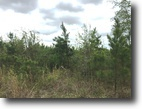 76.09 Acres of Timberland in Clay County