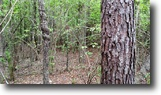 35 Acres of Hunting Land in Oktibbeha Co.