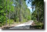 Levy County 40 Acres NE Campbell Road