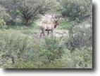 650 acres in West Texas!