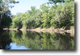 Florida Hunting Land 95 Acres Withlacoochee Bluff Plantation