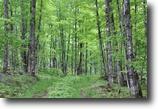 Michigan Hunting Land 80 Acres TBD Dishno Rd., MLS# 1087807