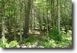 3.021 Wooded Acres, Owner Financing