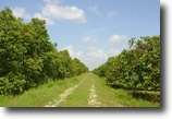 Florida Land 114 Acres Vero West Grove
