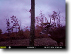 Ohio Hunting Land 85 Acres Penn Ridge