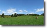 Organic Farmland Fenced Pastures 50 Acres