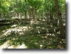 Tennessee Hunting Land 7 Acres 7 ac w/creek on Possum Hollow Rd