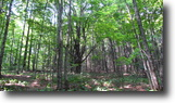 New York Hunting Land 14 Acres Land borders State Forest Owner Financing!