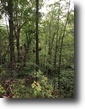 27 acre hunting tract in Cumberland County