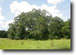 Florida Land 57 Acres Johnston Creek Ranch