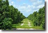 Florida Ranch Land 248 Acres Treasure Coast Ranch Grove