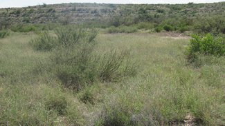 Grass flat along wet weather Calamity Creek which runs thru the entire ranch