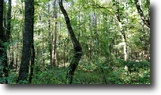 13 Acres for Sale in Clay County
