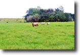 Florida Ranch Land 1 Acres Lonesome Ranch