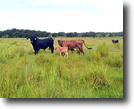 Florida Land 516 Acres Northeast Hillsborough County Ranch