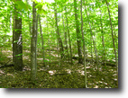 New York Hunting Land 63 Acres Hunting Land with Harvestable Maple Cherry