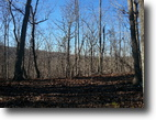 Uwharrie Area 68 Beautifully Wooded Acres