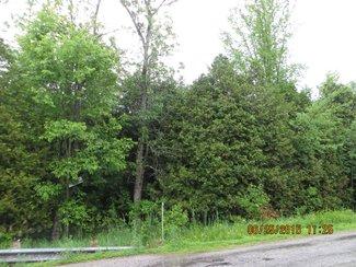 South end bush
