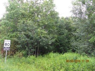 North end bush
