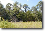 Florida Land 23 Acres I-4 Industrial Land