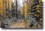 Michigan Hunting Land 10 Acres TBD Old Kiln Rd., MLS# 1091080
