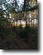 34 Acre Rolling Hills Alabama Property