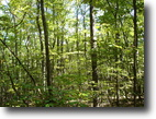 Tennessee Hunting Land 77 Acres Private Home site Potential