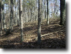 Tennessee Hunting Land 38 Acres Wooded Lot In Great Neighborhood