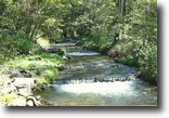 West Virginia Hunting Land 150 Acres Unique Trout Stream Property