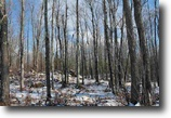 Michigan Hunting Land 37 Acres TBD Herman Rd (36), MLS# 1091543
